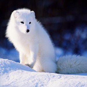 蓝狐有你更精彩