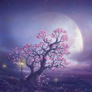 ︶超級月亮♥♡灬