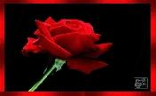 《玫瑰橆魔乐舞吧》家族