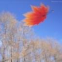 ❦叶落の封尘❦